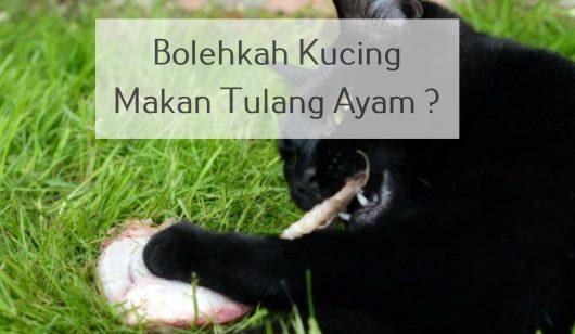Bolehkah Kucing Makan Tulang Ayam