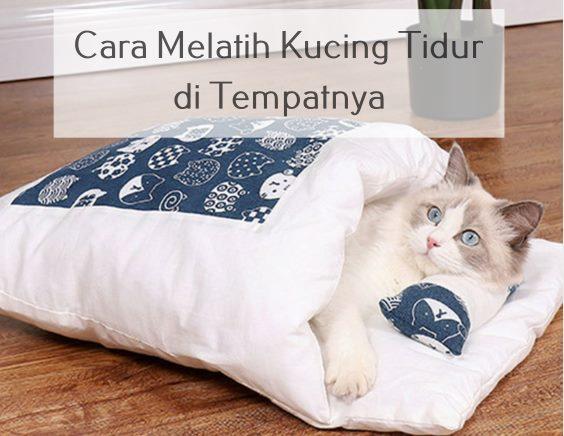 Cara Melatih Kucing Tidur di Tempatnya