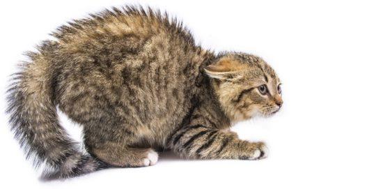 Hal yang ditakuti Kucing