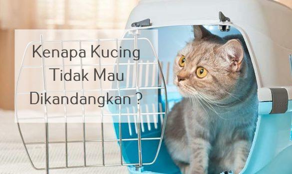 Kenapa Kucing Tidak Mau Dikandangkan