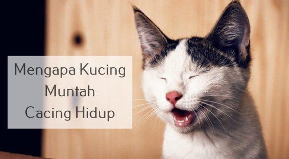 Mengapa Kucing Muntah Cacing Hidup