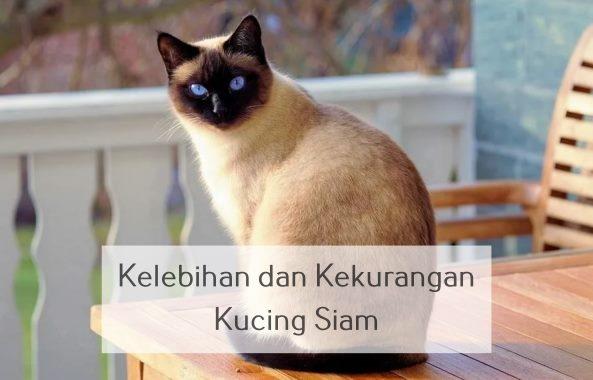 kelebihan dan kekurangan kucing siam